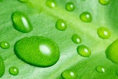 Wated-Tropfen auf grünem Blatt Stockfoto