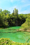 Water湖Plitvice,克罗地亚 免版税库存照片