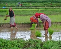 Water, Agriculture, Paddy Field, Water Resources royalty free stock image