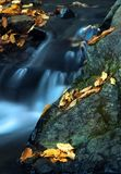 Water And Leaves 1. Royalty Free Stock Photography