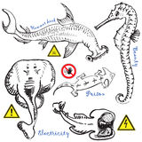 Water animals collection 2 Royalty Free Stock Photography