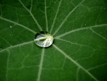Water as a source of life. Rain drop on a leaf Royalty Free Stock Photo