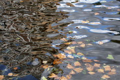 Water with autumn leaves Royalty Free Stock Photo