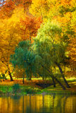 Water with autumn trees in park Royalty Free Stock Photography
