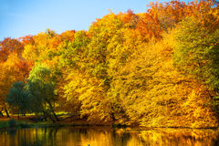 Water with autumn trees in park Stock Photography