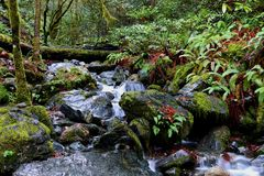 Water babbling over rocks in a fern cover forrest Stock Image