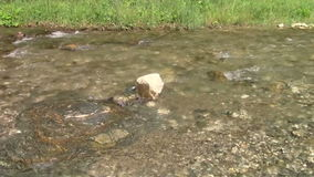 Water background. Close up of mountain river flow stock video footage