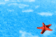 Water background with red starfish Stock Image
