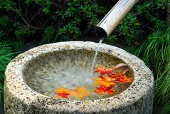 Water basin autumn leaves Stock Photos