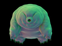 A water bear Royalty Free Stock Images