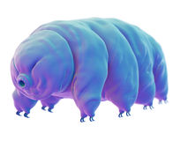 A water bear Royalty Free Stock Photography