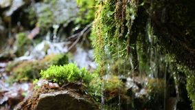 Water from beautiful small brook. In forest stock video