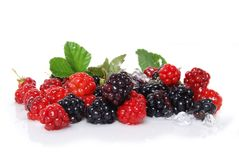 Water Berries Stock Photography