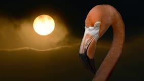 Water Bird, Beak, Flamingo, Bird stock photo