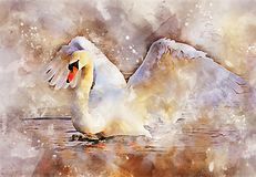 Water Bird, Bird, Watercolor Paint, Ducks Geese And Swans Stock Photos