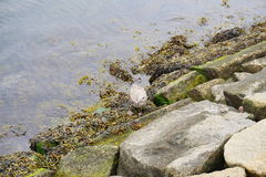 Water and bird. Polluted water and bird in the harbor of Boston Stock Photo