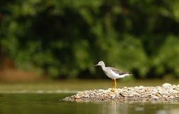 Water bird on river bank, Costarica, exotic vacation to Latin America, bird in its natural enviroment. Water bird on river bank in Dominical, Costarica, exotic stock photo