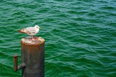 Water, Bird, Sea, Seabird stock images