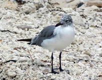 Water bird. Seen in in Florida Royalty Free Stock Image