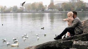 Water, Bird, Vertebrate, Water Bird