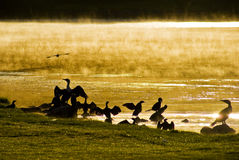 Free Water Birds At Sunrise Royalty Free Stock Images - 16124349