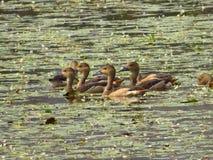 Water Birds. Beautiful water birds feeding and relaxing Stock Photo