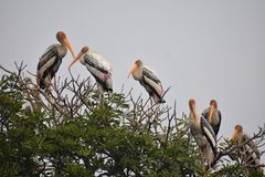 Water birds chilling out. This pic is captured in delhi zoo, where these water birds were chilling out on top of the tree near pound after having full of meal royalty free stock photography
