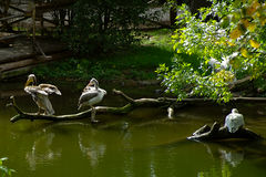 Water birds, friendly animals at the Prague Zoo. Stock Photo