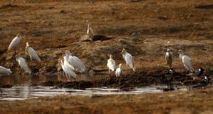 Water birds gathering Stock Image