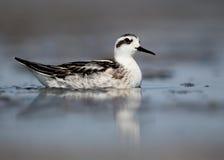 Water birds. Izmir gediz deltası in Turkey Royalty Free Stock Image