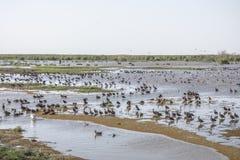 Water birds in Lake Manyara Stock Photography