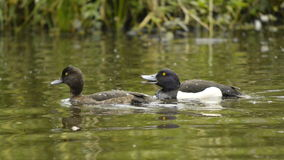 Water birds Stock Photo