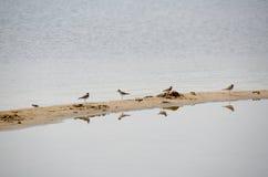 Water birds in oklahoma Royalty Free Stock Image