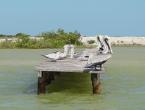 Water birds on pier Stock Photos