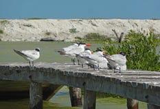 Water birds on pier Stock Photo