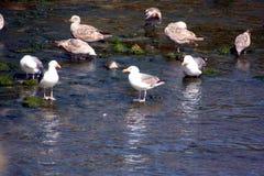 Water Birds Royalty Free Stock Photos