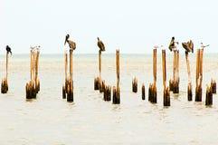 Water birds & x28;Costa Rica, Cahuita national park& x29; Stock Images