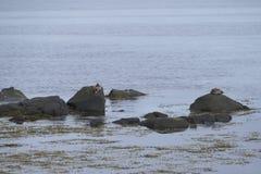 Water birsd habitat at the sea shore Stock Images