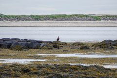 Water birsd habitat at the sea shore Royalty Free Stock Photography