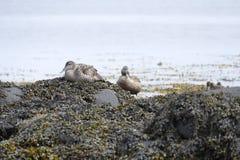 Water birsd habitat at the sea shore Royalty Free Stock Photo