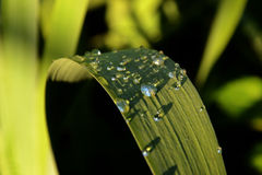 Water on the blade. Sunlight refracted through water droplets Royalty Free Stock Images