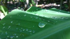 water in bladeren, nadruk in vlekkenwater, mooie mening stock foto's