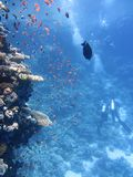 Water, Blue, Coral Reef, Underwater Stock Photography