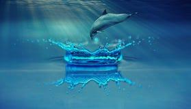 Water, Blue, Dolphin, Marine Mammal Royalty Free Stock Photo