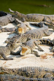 Water bodies on the Crocodile Royalty Free Stock Image