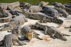 Water bodies on the Crocodile Royalty Free Stock Photography