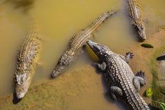 Water bodies on the Crocodile Farm in Dalat. Stock Image