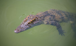Water bodies on the Crocodile Farm in Dalat. Royalty Free Stock Photo