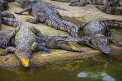 Water bodies on the Crocodile Farm in Dalat. Royalty Free Stock Images