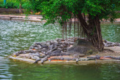Water bodies on the Crocodile Farm in Dalat. Royalty Free Stock Image